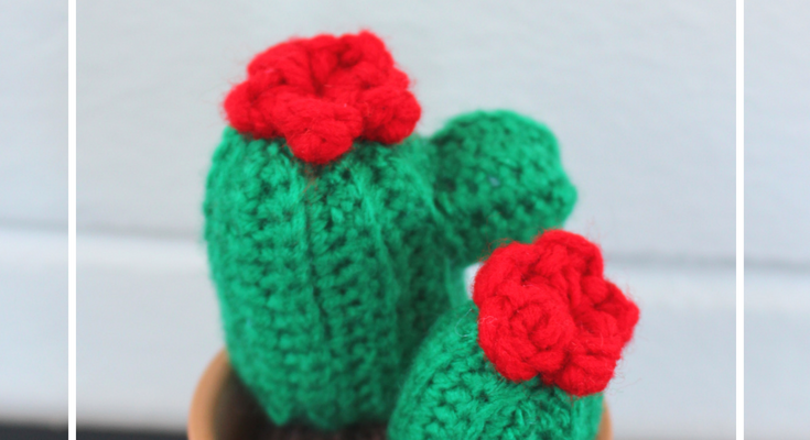 Easy Little Cactus